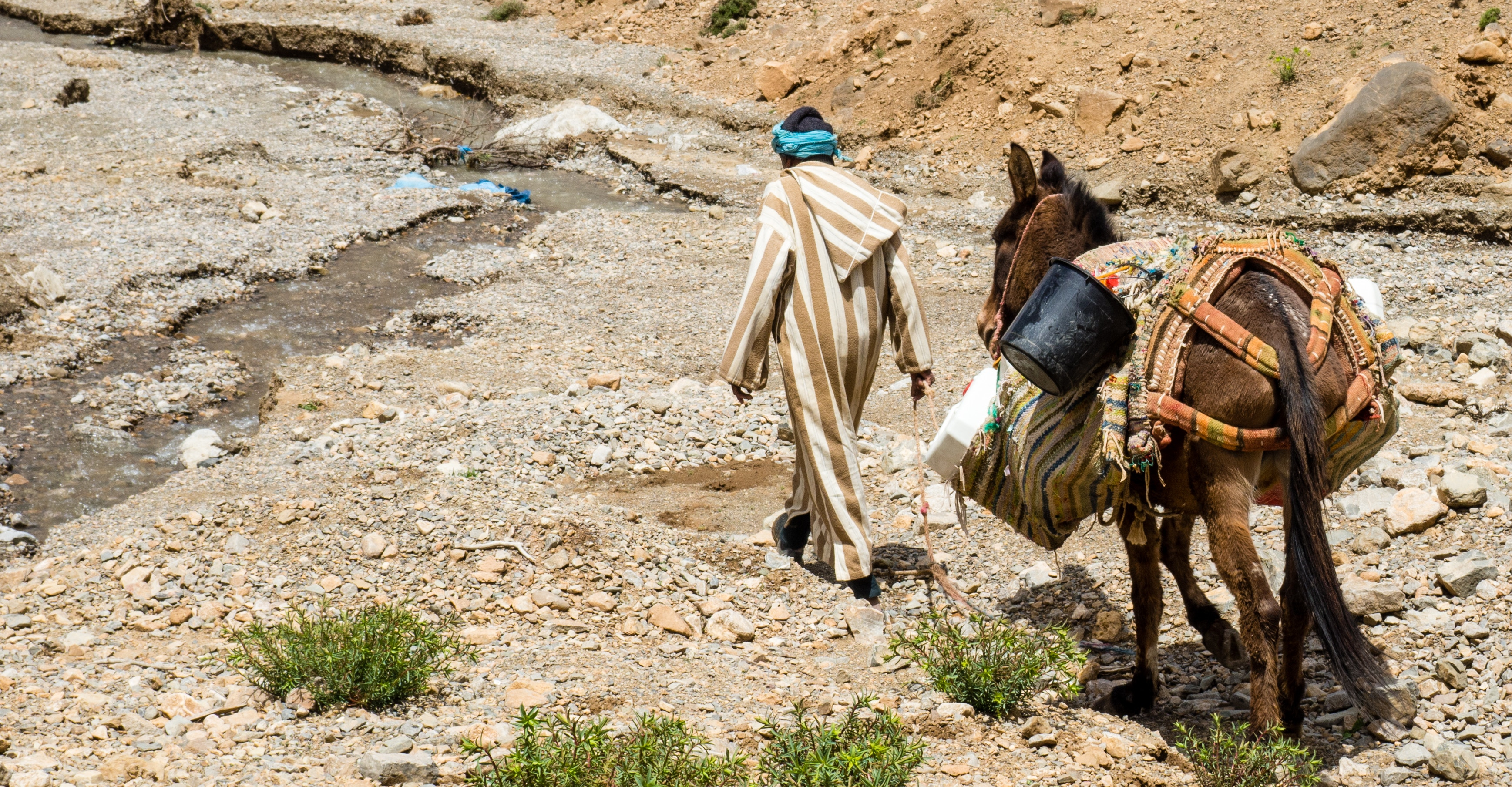Berber carrying load up mountain